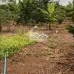 đất vườn 2,3 sào đang có nhiều loại cây ăn trái .