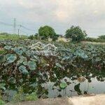 Cần tiền bán gấp lô đất gần hồ sen quất động