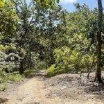 đất rừng sản xuất .. sổ xanh