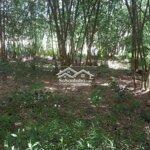 Bán đất huyện đạ huoai 36000m²