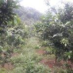 Bán từ 1,5ha đến 5ha đất rừng sản xuất đẹp kim bôi