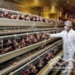 đất 57931m² bình thuận, trang trại gà siêu sạch