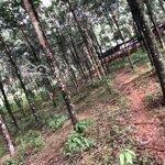 Bán rẫy 7.3 ha có 500m mặt tiền đường