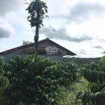 Cần bán rẩy gần quốc lộ 14 tại tỉnh đăk nông