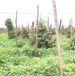 Cần bán lô đất rẫy xã nâm njang, đăk song, đắk nông, giá tốt
