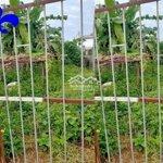 đất full thổ cư- hẻm điêu văn cải gần trường dhtn