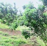 Bán đất trồng cây ăn quả và trồng tràm u minh