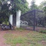 Trại heo và vườn mít cùng hồ tiêu 5ha2 giá bán 3ty5