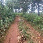 Cần bán 2 ha cao su tại huyện đăkrlap, đăk nông