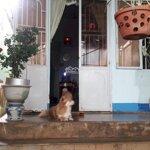 Bán nhà cấp 4 mặt tiền đường chi lăng, phường hoa lư, tp plei ku, tỉnh gia lai