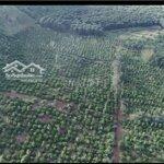 Trang trại sinh thái viuhồ 61hecta cây ăn trái