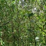 Diện tích 30.704m2 đất rừng sản xuất giá chỉ 1.8tỷ