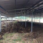 Cho thuê 5500m2 đất có nhà mái tôn lạnh làm kho xưởng, chăn nuôi trồng trọt tại cam lâm khánh hoà