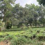 Chính chủ cần bán gấp lô đất 2797,8m2 tại thôn 9, xã ba trại, ba vì, hà nội.lh thu hương:0975349726