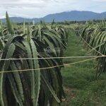 Bán 4ha5 đất cây trồng được cấp phép chăn nuôi gần đường dẫn cao tốc hàm kiệm - tiến thành