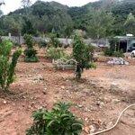 Bán trang trại tại khánh hòa, giá rẻ thuộc xã vĩnh lương cạnh ql1a, 1500m2. liên hệ: 0977681668
