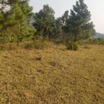 đất rừng sản xuất tại lương sơn, hòa bình 2,5ha, giá 1,25 tỷ