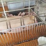 Bán trang trại chăn nuôi tỉnh hòa bình