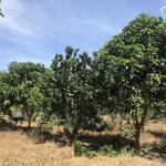 Bán lô đất trồng bưởi định quán tại ngọc định, giáp sông