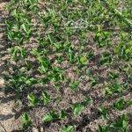 Cần bán 14500m2 đất đang trồng cây mít con và sầu