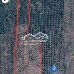 đất huyện đức linh 35000m²