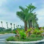 Bán lô góc còn lại duy nhất khu a dự án palm city chí linh. lh: 0961057966