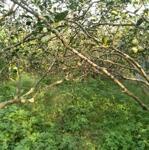 Bán vườn bưởi có nhà cấp 4, dt 822m view sông xã bình lợi, giá chỉ 2ty750