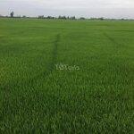 đất lúa huyện tân hiệp 64.000m²