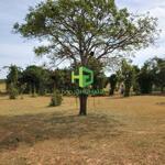 Bán hơn 2.5 hecho thuêa đất vườn xã hồng thái, cách đường liên xã 50m, giá bán 90.000đ/m2, liên hệ: 0937251240