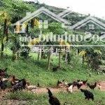Chuyển nhựng 20 ha đất trang trại tại tỉnh hòa bình
