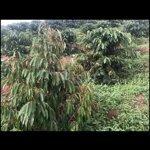 đất huyện đắk hà 24.000m² trang trại bán