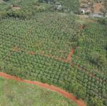 đất nông nghiệp siêu đẹp, giá siêu tốt, tại thuận an, đắk mil.