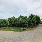 2070m2 đất 2mt đường đá mi trồng xoài giá bán 1060 triệu.