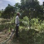Bán rẻ lô đất vườn trồng xoài khỏi thương lượng dt 1000m2 giá 535tr phú ngọc, định quán 0932056011