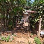 Cho thuê nhà thôn 6 đăk wer, kèm theo đất