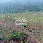 đất huyện đắk song 23 hecta có sổ không qua cò