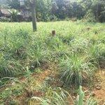 Cần bán lô đất 540m có 75m thổ cư. tại hòa sơn