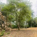 Cần nhượng lại mảnh đất đẹp giá rẻ tại thống nhất hòa bình 1896m2