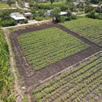 đất vườn lên thổ xã tân thành - thủ thừa, đường đal 6m trước đất, giá 1tỷ6, 0938334473