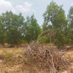 Cơ hội để sở hữu lô đất đẹp rộng 21ha tại xã sông lũy - huyện bắc bình - tỉnh bình thuận
