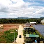 Cần tiền bán lỗ lô đất ngay khu dân cư thị trấn thạnh mỹ