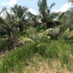 đất vườn dừa 776m2 11,60x68mmặt tiềnlộ 1,5