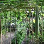 đất làm nhà vườnmặt tiềnkênh đức lập, 1200m2 giá bán 750 triệu