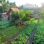 Đất Vườn Home Stay Lộc Nam -Bảo Lộc ,Giá Ngộp
