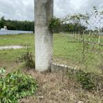 đất vườn củ chi giá rẻ 563m2 1ty060 shr công chứng sang tên ngay