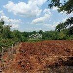 Bán 1,9 hécta đất đỏ bazan tại cư jút - đắk nông