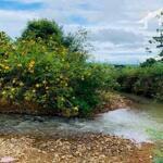 Cần Tìm Chủ Mới Cho BĐS Vườn 1000m2 Bình Long - Bình Phước