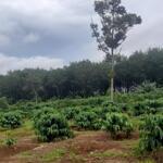 4ha đất vườn sầu riêng có 400m² thổ cư, giá đầu tư chỉ 3.5 tỷ.