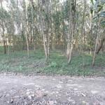Bán 1000m2 đát trồng cây hằng năm, ngang 50 mét, vị trí chuyển lên đất ở được