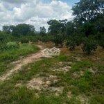 Bán 9 sào đất đang trồng quýt tại xã ea nuoil